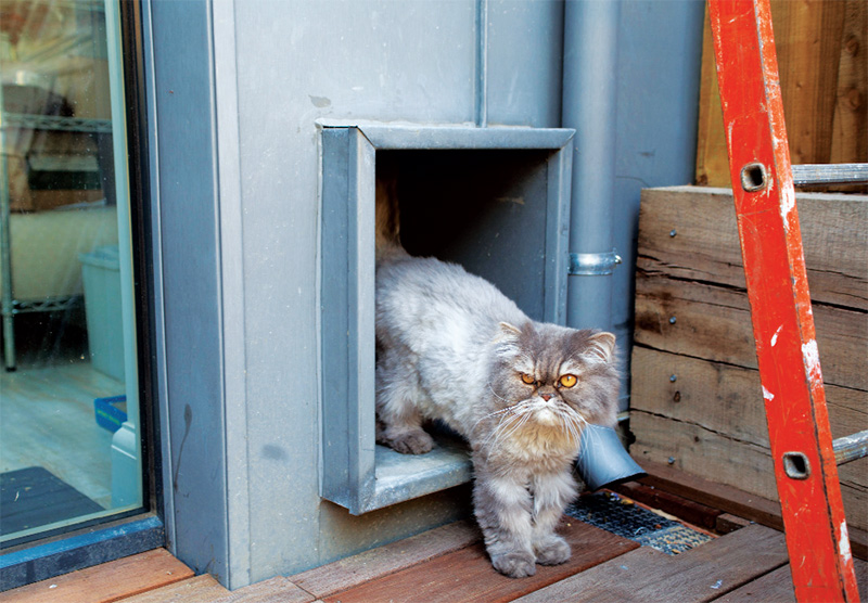 An airtight catflap was installed to give the pets access to the house