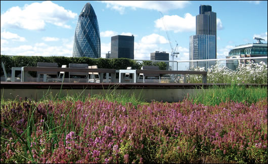 The green roof on law firm Allen & Overy's London headquarters
