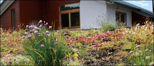 the master bedroom looks out onto this sedum roof which creates a visual link between the house and its surroundings