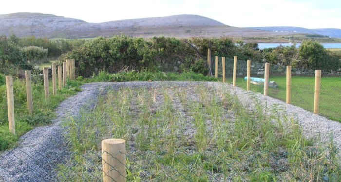 A newly planted reed bed system in County Clare